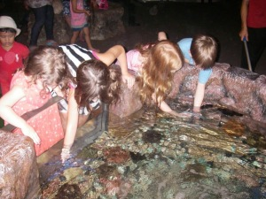 At the touch tank.