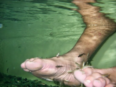 A fishy pedicure