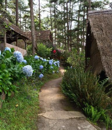 A path on the island