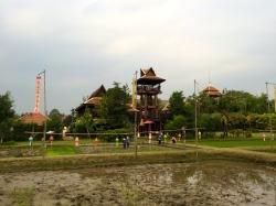 Siripanna behind the rice paddy