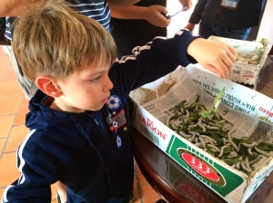 Checking out silkworms
