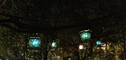 Lanterns hanging from the enormous banyan in front of Lara