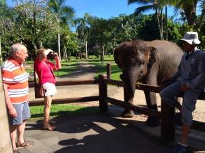 Elephant introduction