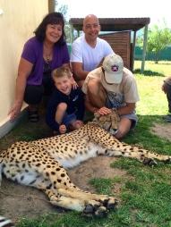 Cheetah petting