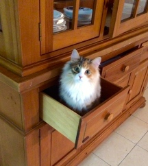 She likes drawers, too