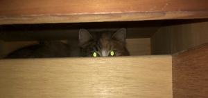 Vicious kitties